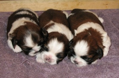 15 Day old Babies