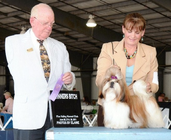 Shih Tzu Puppies Champion Females Sapphire Shih Tzu