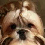 Puppy Remi (3)